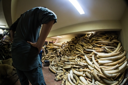 Yao Ming Stares at a Stockpile of Ivory at Kenya Wildlife Service