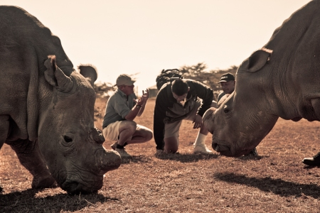 Yao Ming Encounters Northern White Rhinos at The Ol Pejeta Conservancy