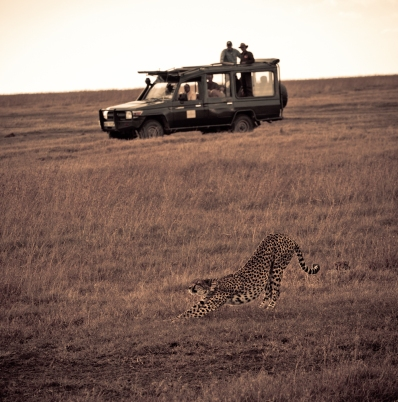 Yao Ming and Crew Encounter a Cheetah at the Ol Pejeta Conservancy