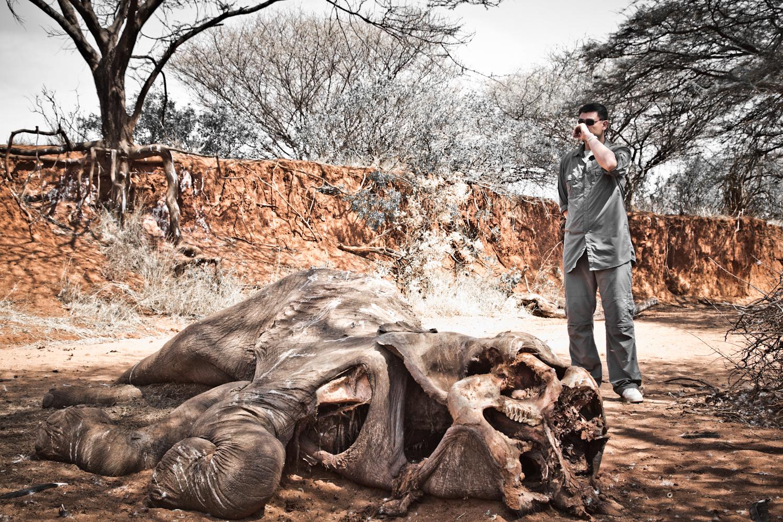elefante morto por caçadores ilegais
