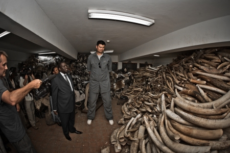 Yao Ming and a Stockpile of Ivory at Kenya Wildlife Service